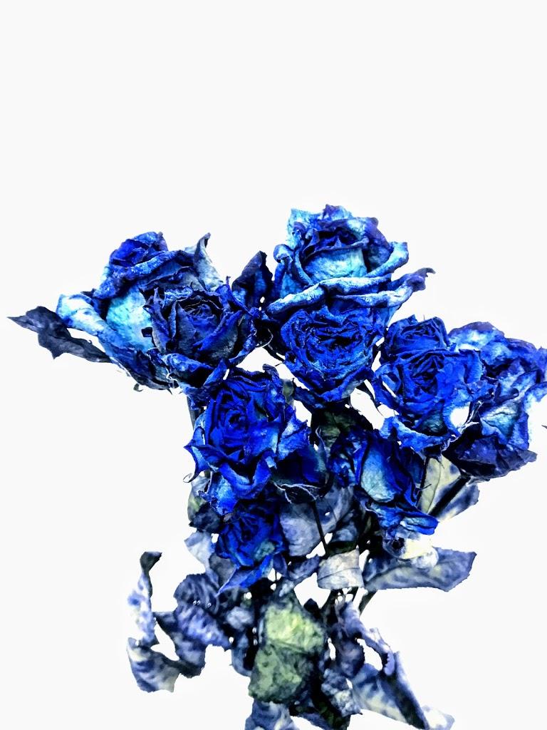 f:id:asunaro-flower:20200623011316j:plain