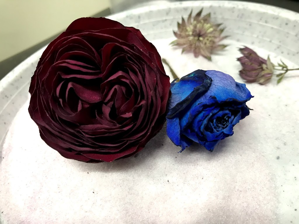 f:id:asunaro-flower:20200623011625j:plain