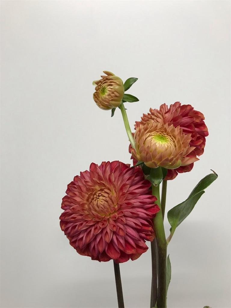 f:id:asunaro-flower:20200623012501j:plain