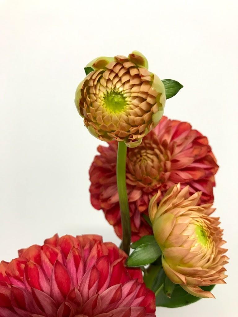 f:id:asunaro-flower:20200623012518j:plain