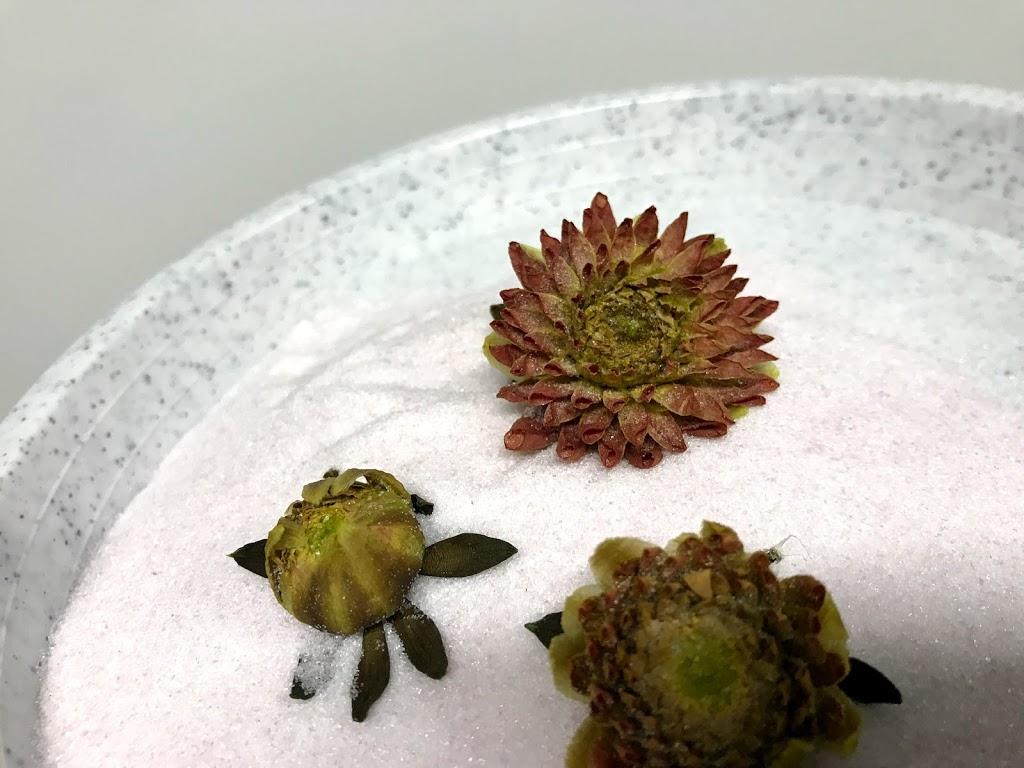 f:id:asunaro-flower:20200623012615j:plain