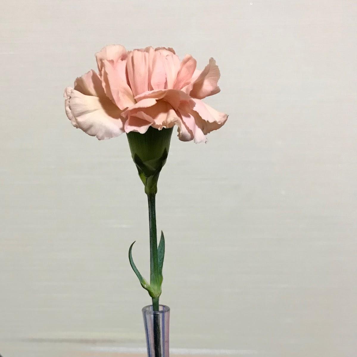 f:id:asunaro-flower:20200623013528j:plain