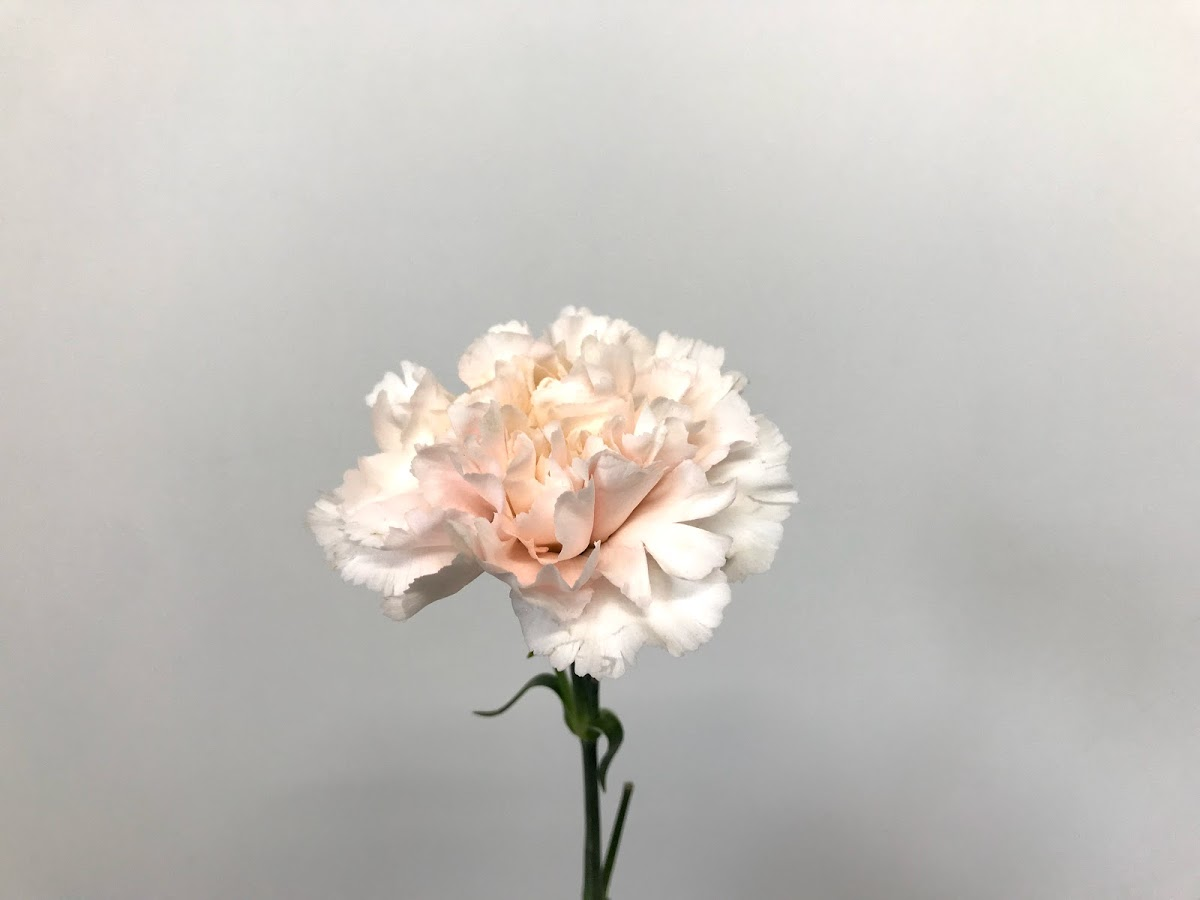 f:id:asunaro-flower:20200623013547j:plain
