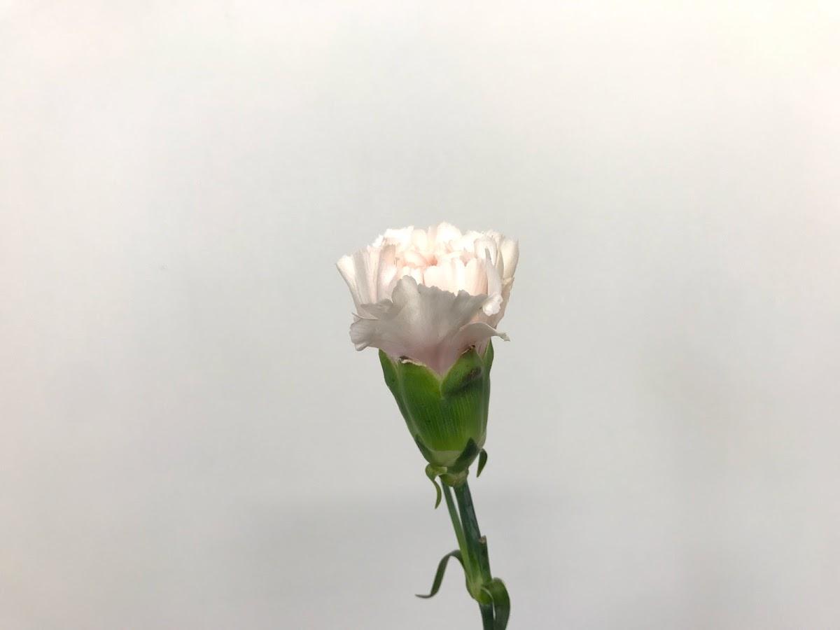 f:id:asunaro-flower:20200623013557j:plain