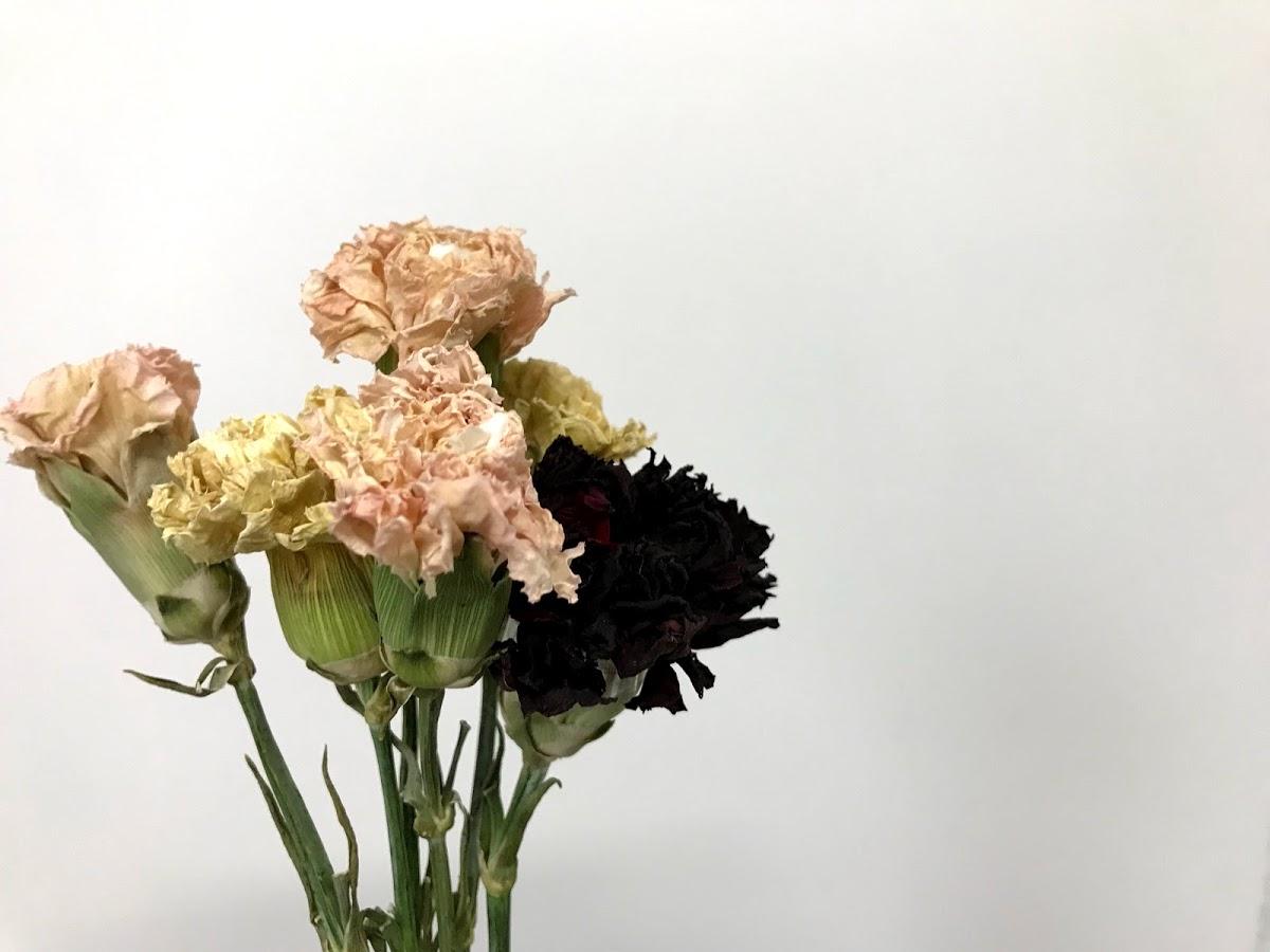 f:id:asunaro-flower:20200623013630j:plain