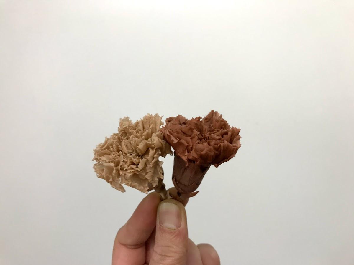 f:id:asunaro-flower:20200623013806j:plain