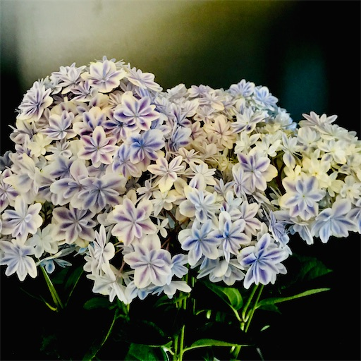 f:id:asunaro-flower:20200704150931j:image