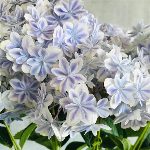 f:id:asunaro-flower:20200704151219j:image