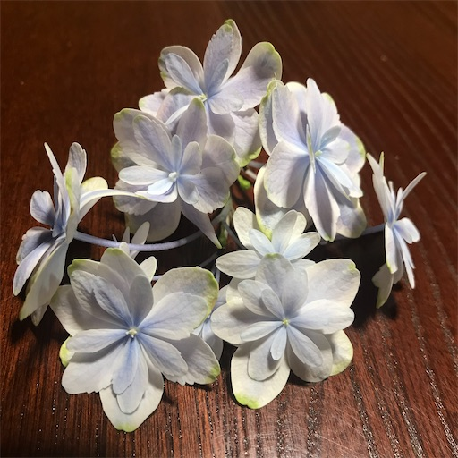 f:id:asunaro-flower:20200704151834j:image