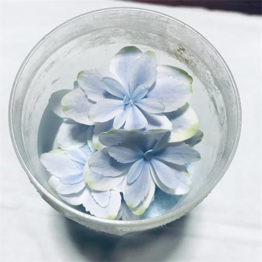 f:id:asunaro-flower:20200704152725j:image