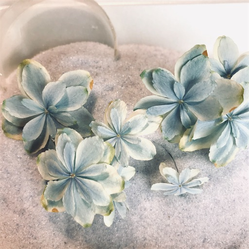 f:id:asunaro-flower:20200704190311j:image