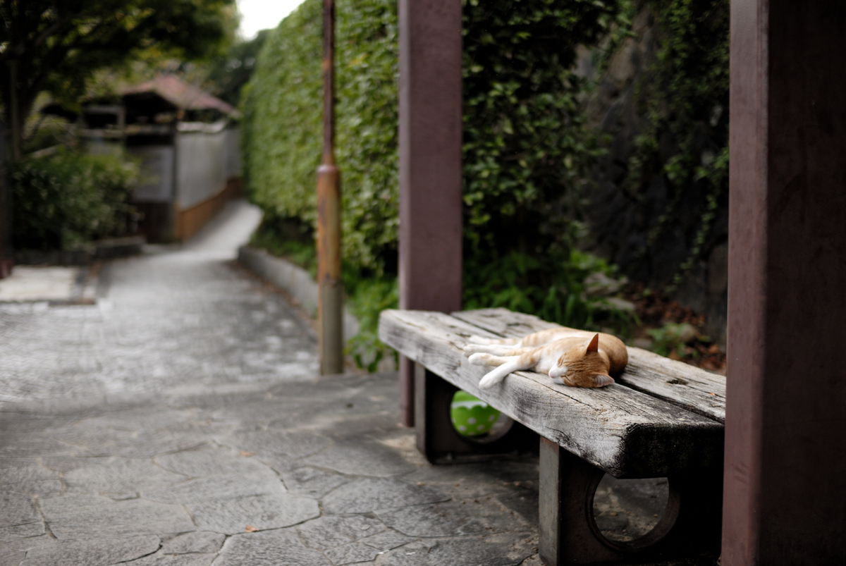 ネイチャーフォト 尾道 猫 散歩