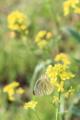 [花][昆虫]