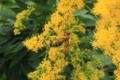 [昆虫]ハチ