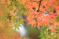 [紅葉][鎌倉]円覚寺