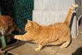 [猫]猫パンチ