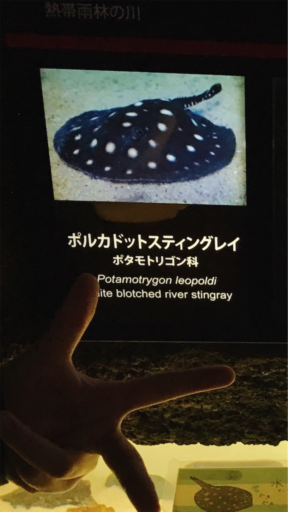 f:id:atamagaokashikunatta:20200302220727j:image