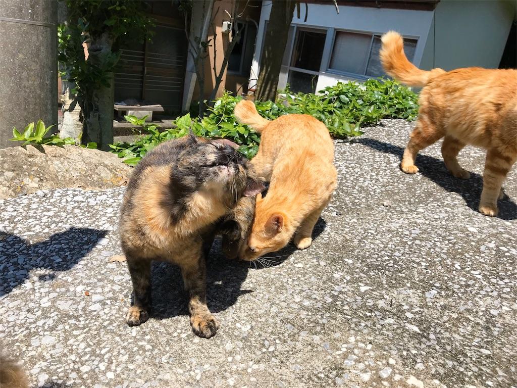 f:id:atamagaokashikunatta:20200429234449j:image