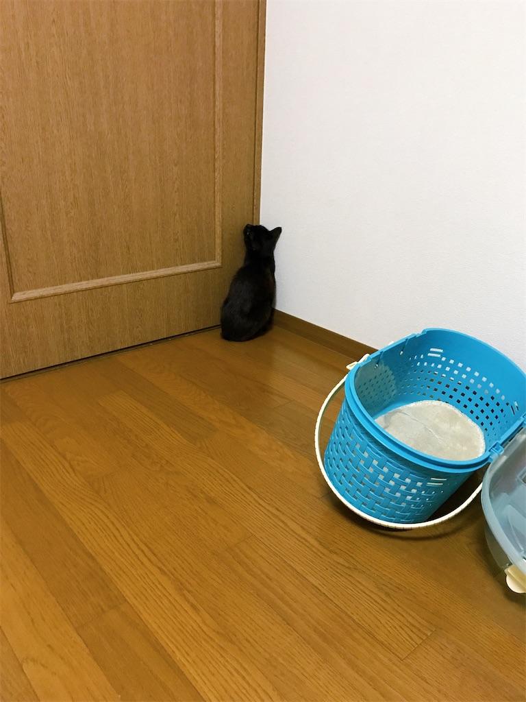 f:id:atamagaokashikunatta:20200619212837j:image