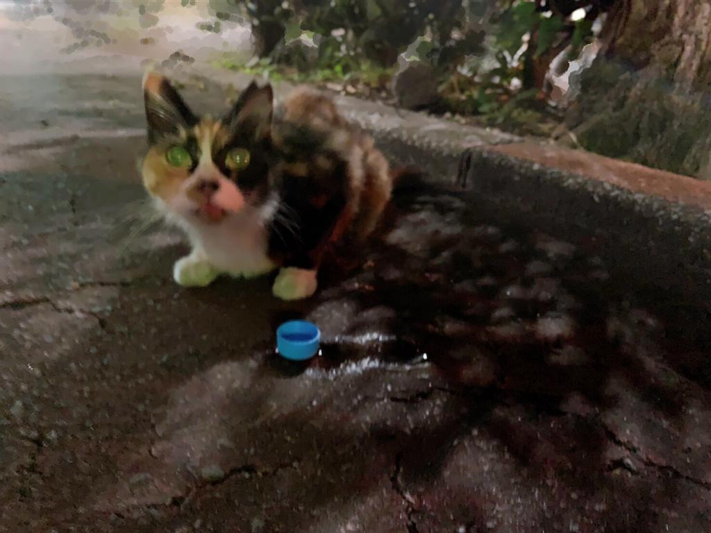 f:id:atamagaokashikunatta:20200827021122p:image