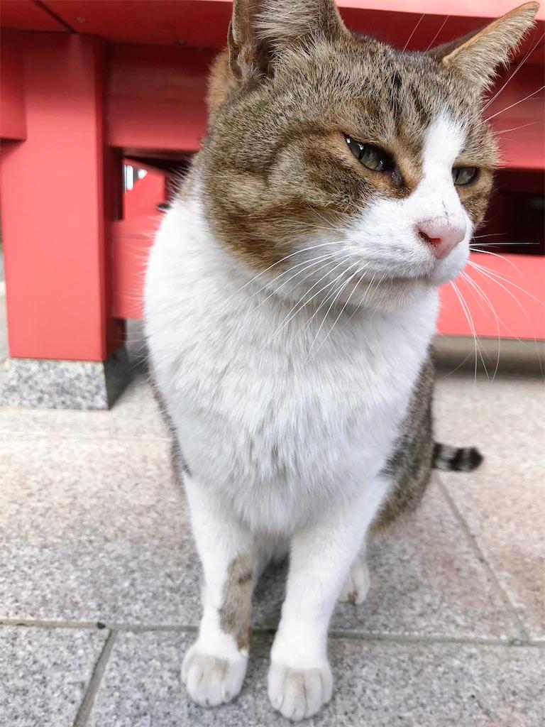 f:id:atamagaokashikunatta:20210104002736j:image