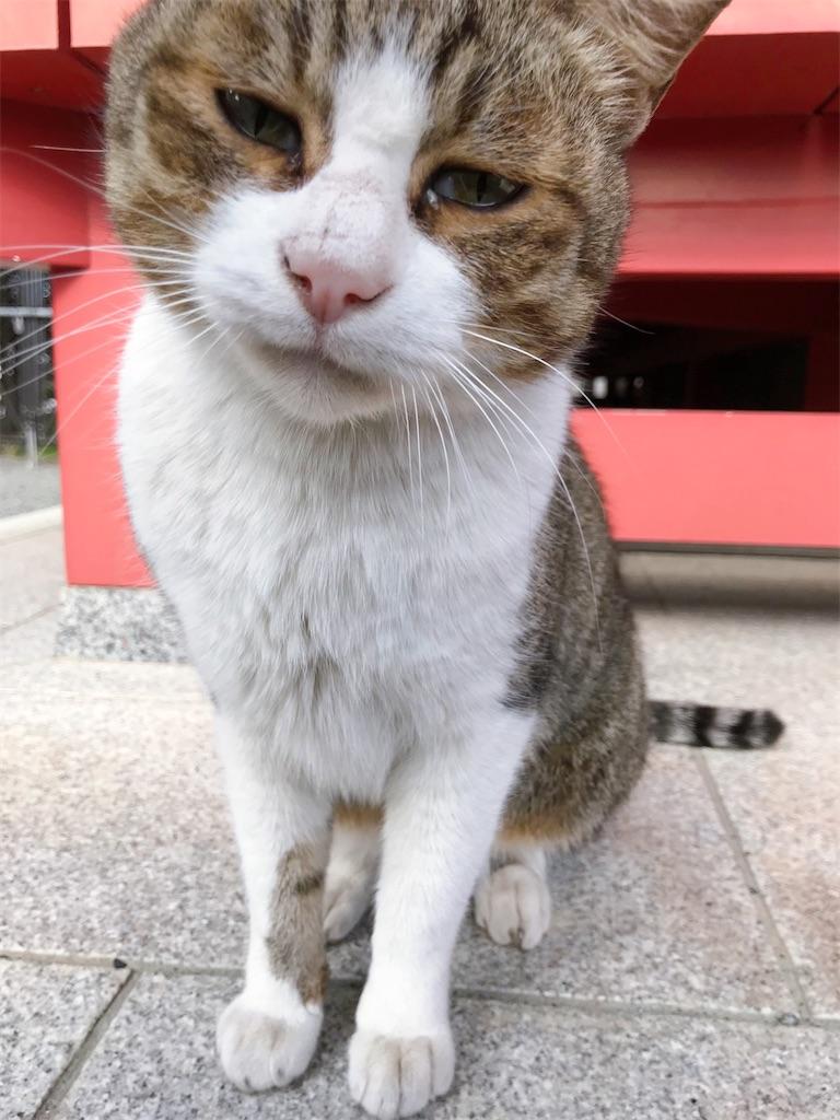 f:id:atamagaokashikunatta:20210104002821j:image