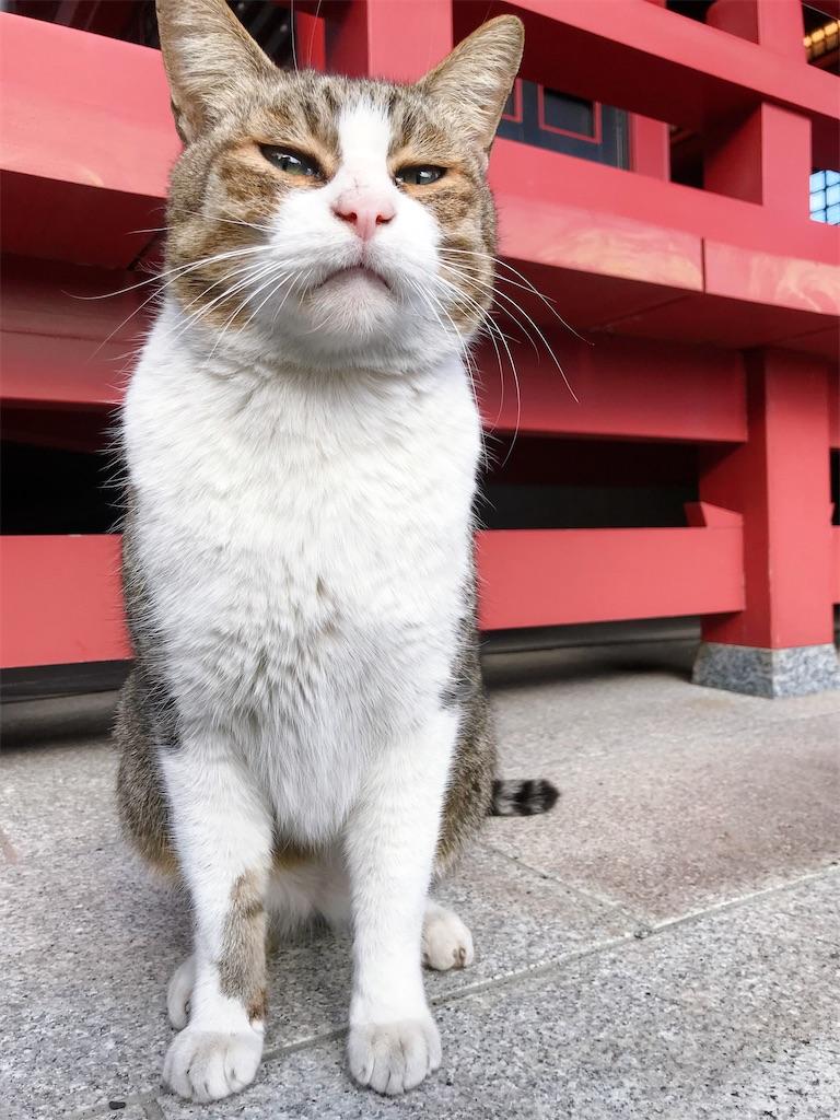 f:id:atamagaokashikunatta:20210104002924j:image