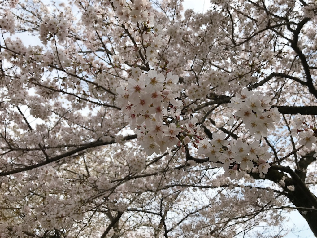 f:id:atamagaokashikunatta:20210328213844j:image