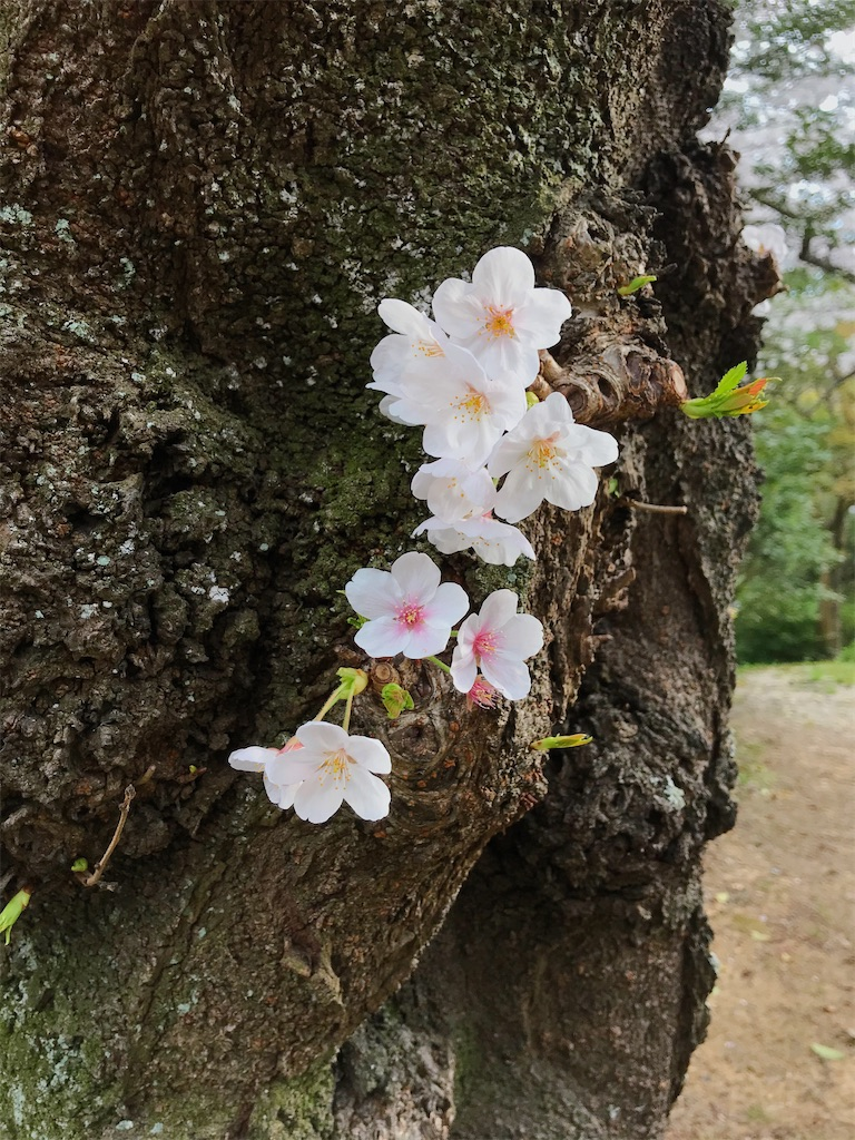 f:id:atamagaokashikunatta:20210328221550j:image