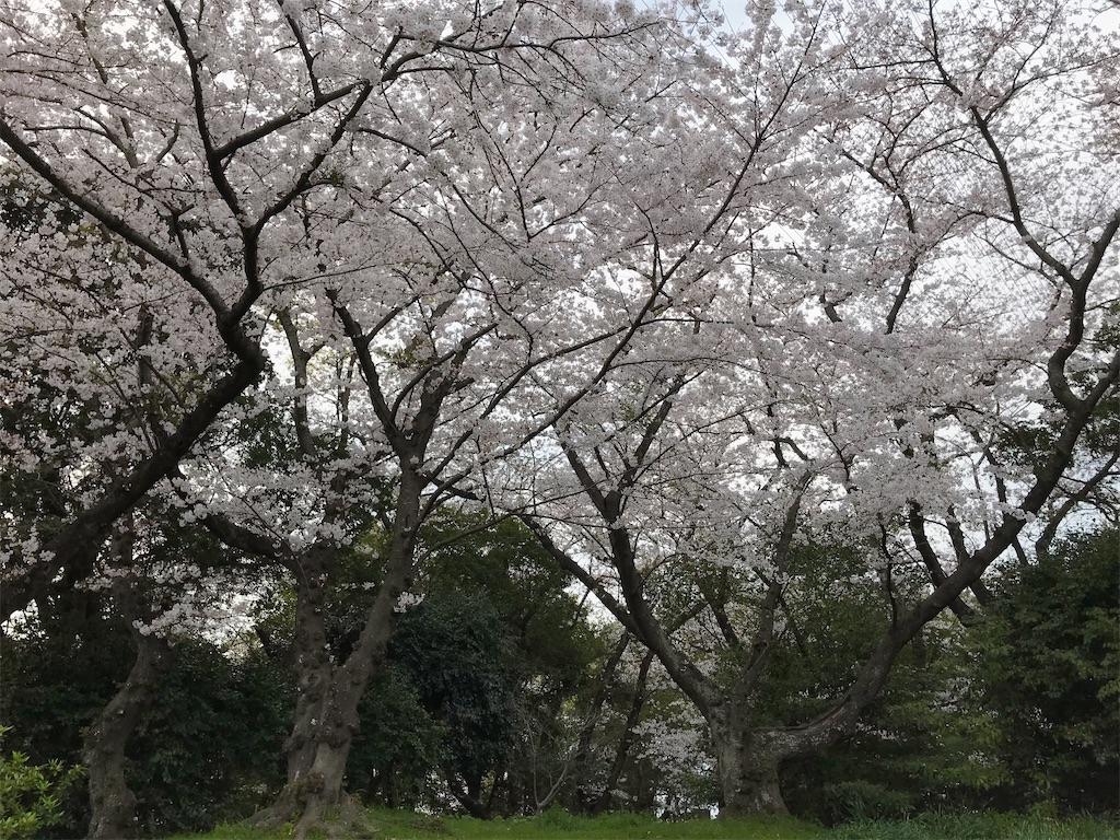 f:id:atamagaokashikunatta:20210328221929j:image