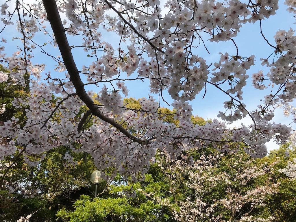 f:id:atamagaokashikunatta:20210328223937j:image