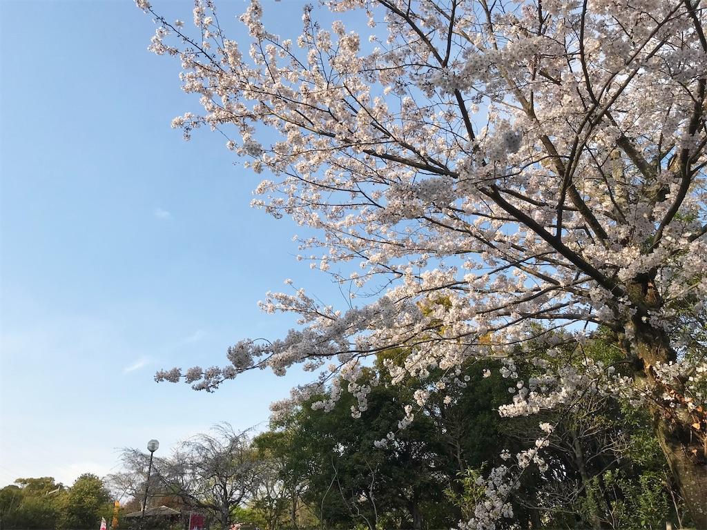 f:id:atamagaokashikunatta:20210328224625j:image