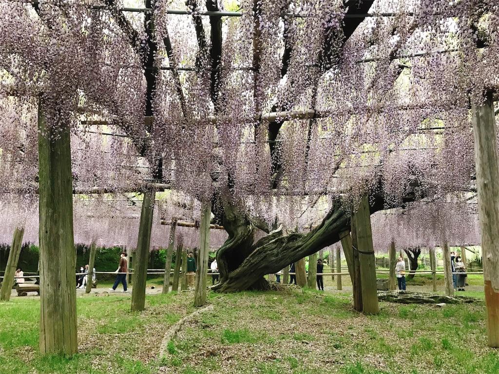 f:id:atamagaokashikunatta:20210502215643j:image