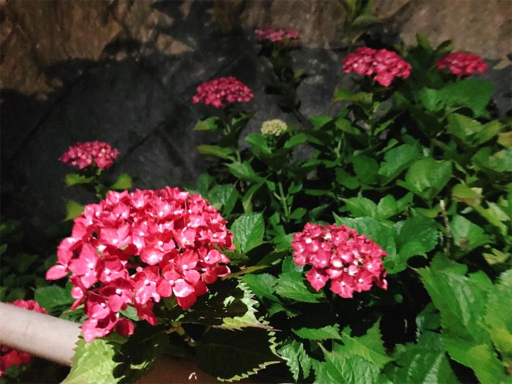 f:id:atamagaokashikunatta:20210529225909j:image
