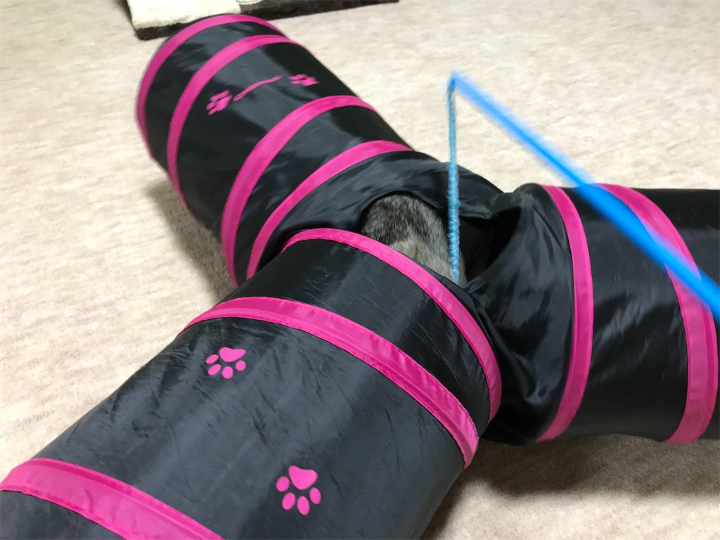 f:id:atamagaokashikunatta:20210707205646j:image