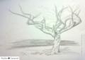 Tree-mono