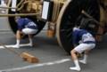 京都新聞写真コンテスト ハンドル代わりのカブラゴテ