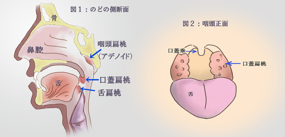 f:id:atsuhiro-me:20090611230945j:plain:w300