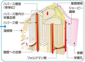 f:id:atsuhiro-me:20151128033230j:plain:w300