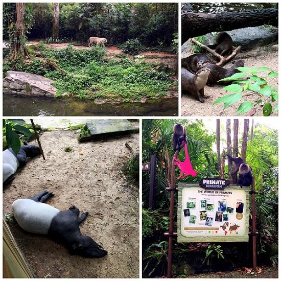 singapore zoo 01 2016-10-08