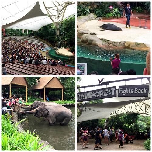 2016-10-08 singapore zoo Show