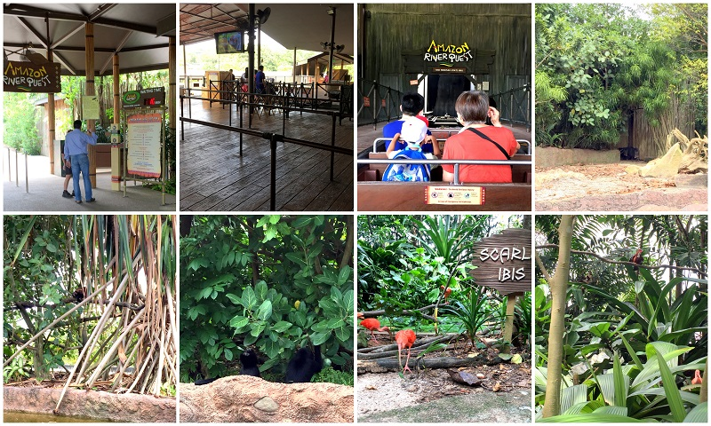Singapore River Safari Amazon River Quest 2016-10-08