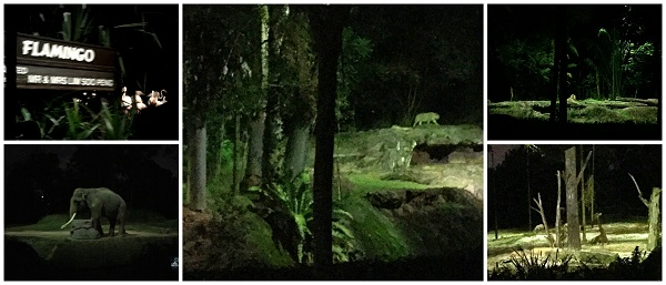 Singapore Night Safari Photo 2016-10-08