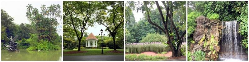 Singapore Botanic Gardens swan lake 2016-10-09