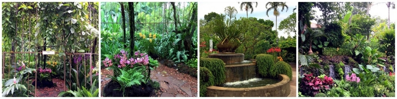 Singapore Botanic Garden National Orchid Garden 2016-10-09 (2)