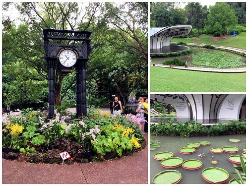 Singapore Botanic Garden 04 2016-10-09 (2)