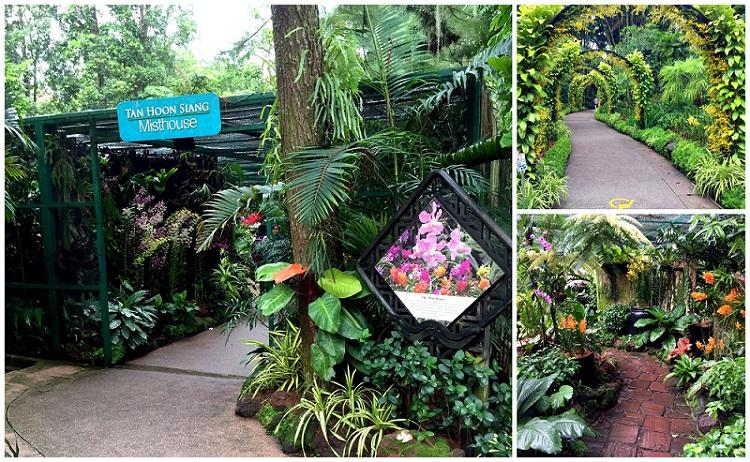 Singapore Botanic Garden National Orchid Garden 031 2016-10-09