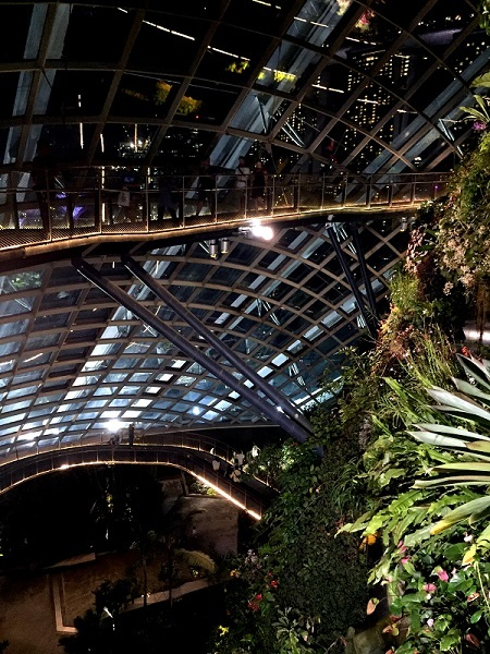 Cloud Forest IMG_7397