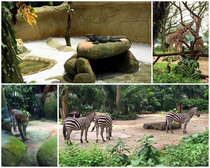 Singapore zoo animal 2016-10-08
