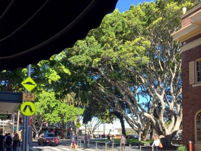オーストラリア シドニー マンリー 大きな木 木の下のベンチで一息